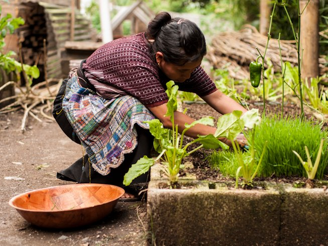 5 Days Medicinal Plants and Yoga Retreat in Guatemala