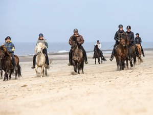 7 Day Trail Riding Holiday in Nørre Nebel