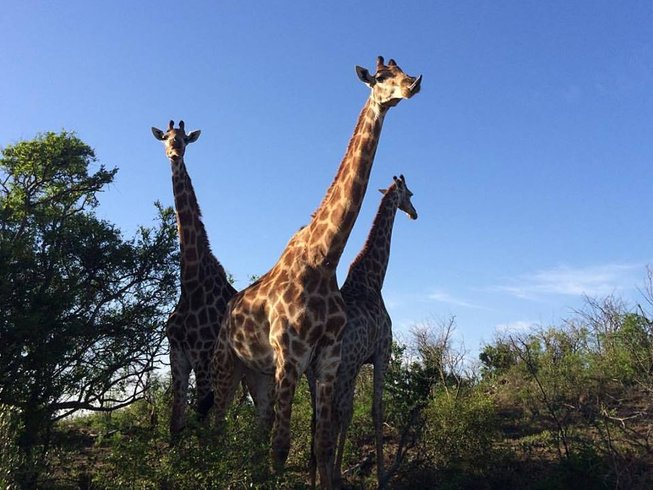 4 Days Kruger National Park Safari in South Africa