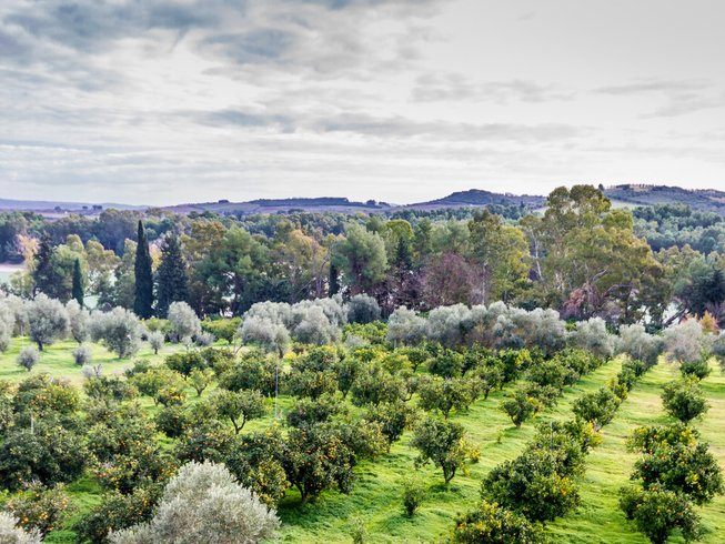 7 Days Culinary Holidays in Italy