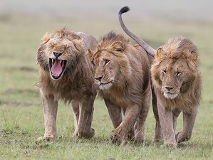 5 Days Guided Kenya Safari