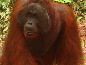 3 Day Orangutan and Wildlife Tour in Tanjung Puting National Park, Kalimantan
