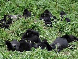 16 Days Uganda and Serengeti Great Migration Safaris in Tanzania