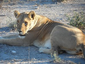 3 Days Safari in Etosha National Park