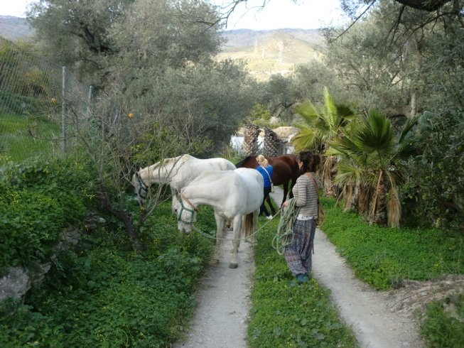 7-Daagse Paarden, Meditatie en Yoga Retraite in Andalusië, Spanje