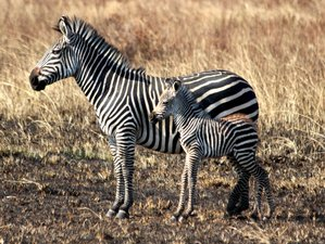 2 Days Budget Safari in Mikumi National Park, Tanzania