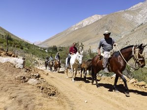 3 Day El Colorado and Cochiguaz Valley Horse Riding Holiday in Pisco Elqui, Coquimbo Region