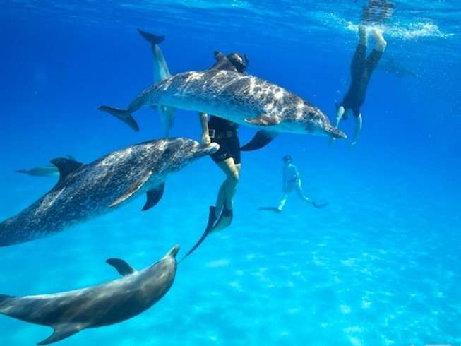 7 Days Dolphin Watching and Yoga Retreat in Bimini, the Bahamas