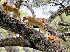12 Days Hiking and Wildlife Safari in Tanzania
