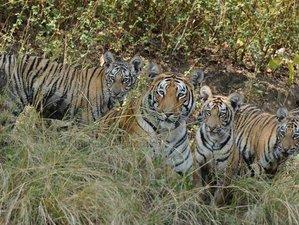 8 Day Tiger Safari in Madhya Pradesh