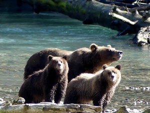 4 Day Grizzly Bears Watching Experience in Powell River, British Columbia