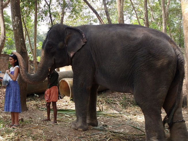 3 jours incroyables de yoga dans une forêt de l'Inde
