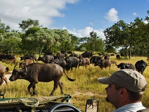 6 Days Affordable Big Five Safari in South Africa