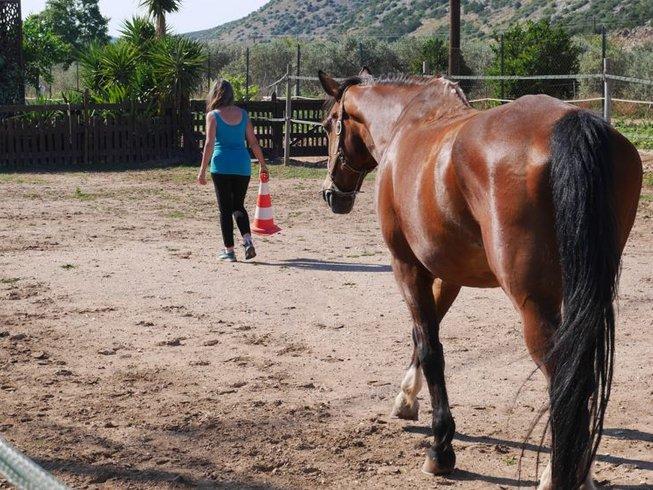 7 jours en stage de yoga nidra, guérison avec les chevaux et photographie à Nea Makri, Grèce