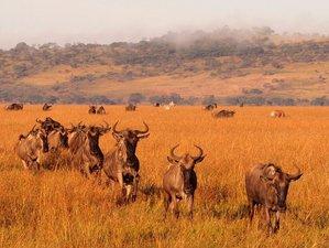 5 Days Adventure Safari in Tanzania