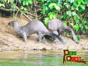 8 Day Boat Trip and Wildlife Tour in Manu National Park, Cusco Region