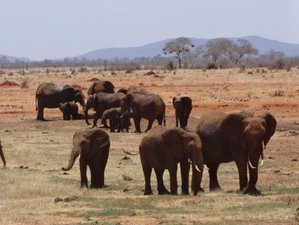 3 Days Tsavo National Park Safari in Kenya
