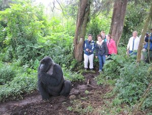 3 Days Intriguing Gorilla Safari in Rwanda