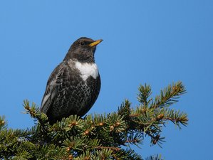 3 Day Birdwatching Tour in Ladoga Lake, Leningrad Oblast