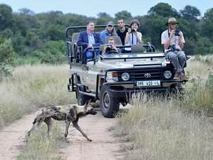 4 Days Safari in Klaserie Nature Reserve, South Africa