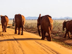 4 Days Private Safari in Kenya