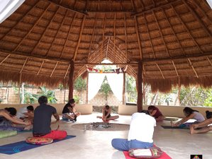 6 Day Ayahuasca Retreat in Cancun