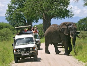 8 Days Lodge Safari Tour in Northern Tanzania