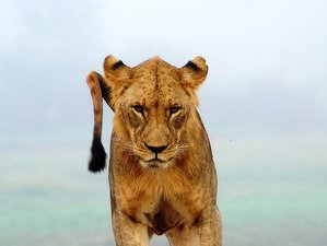13 Days The Plains of African Wildlife Safari in Kenya
