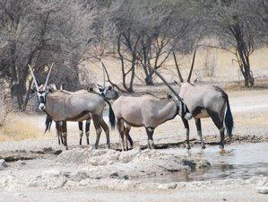 8 Day Impala Trail Safari in Botswana