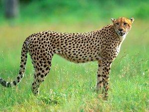9 Days Most Beautiful Parks Safari in Kenya