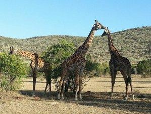 3 Days Tsavo West Safari in Coast Province, Kenya