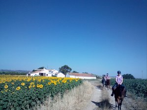 8 Days Horse Riding and Yoga Holiday in Andalusia, Spain