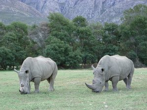 2 Days Exciting Budget Safari South Africa