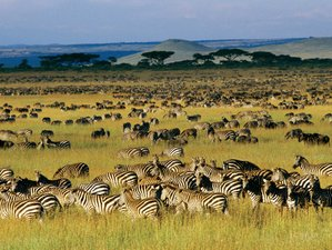 5 Days Great Migration Pentagon Safari in Tanzania