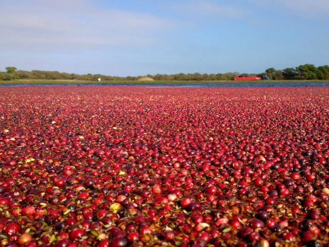 4 Days Cranberry Festival Culinary Vacation in USA