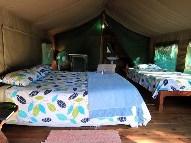 5 Days Wet and Wild Safari in South Africa