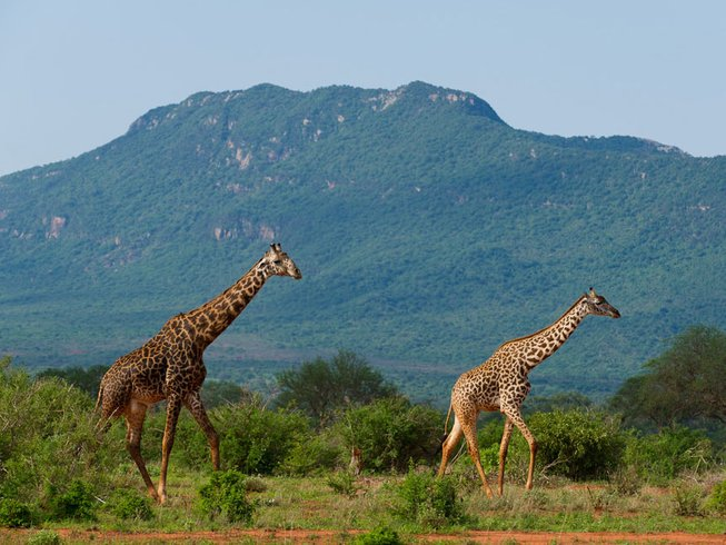 4 Days Tsavo East National Park, Tsavo West and Amboseli.