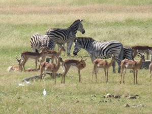 3 Days Chobe Camping Safari in Botswana