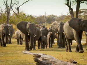 11 Day Mobile Luxury Tented Camp Safari in Northern Botswana