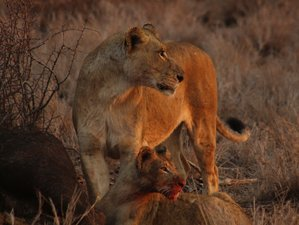 6 Days Classic Kruger Safari in South Africa