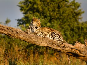10 Day Green Season Mobile Camping Safari Tour in Botswana