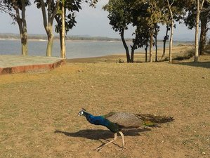 3 Days Satpura National Park Wildlife Safari in India