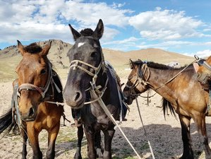 9 Day Central Mongolia Horseback Riding Holiday in Mongolia
