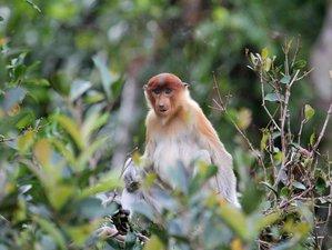 5 Day Orangutan Tour and Dayak Experience in Tanjung Puting National Park, Indonesia