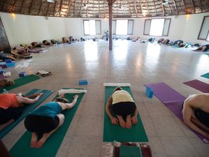 8 Days Meditation and Yoga Retreat in Mexico