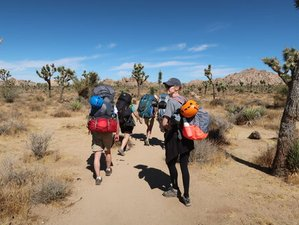 3 Day Backpacking, Rock Climbing, and Leadership Adventure in Joshua Tree National Park, California