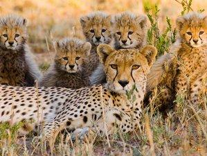 3 Days Tarangire, Ngorongoro, and Lake Manyara Camping Safari in Tanzania