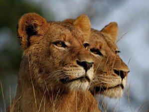 4 Days Chobe National Park Safari