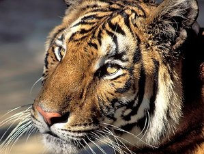 13 Day Tiger and Wildlife Safari in India