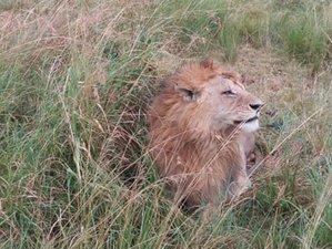 5 Days Masai Mara Lake Naivasha, and Lake Nakuru Safari in Kenya
